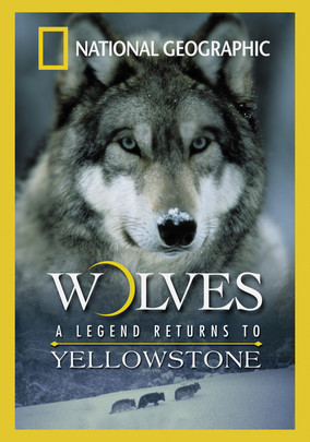 Rent Wolves: A Legend Returns to Yellowstone on DVD