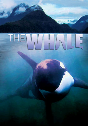 Rent The Whale on DVD